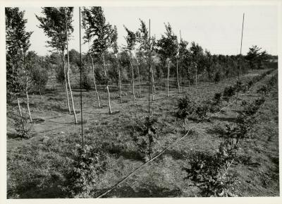 Landscape irrigation project in the Conservation Nursery