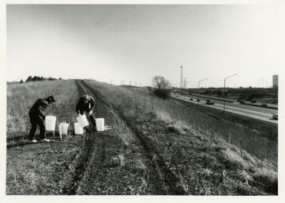 Salt study, Rose Reid and Rick Hootman placing plastic buckets on berm along freeway