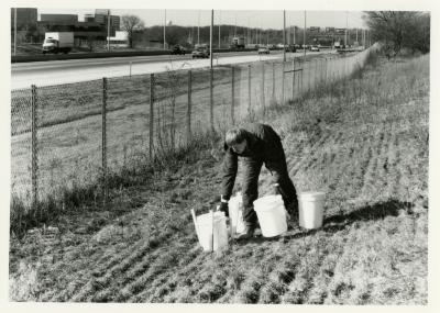 Salt study, Rick Hootman placing plastic buckets on berm along freeway