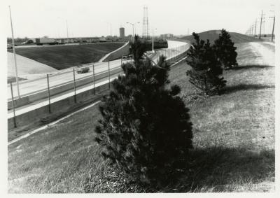 Salt study, evergreens on berm along freeway