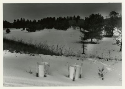 Salt study, plastic buckets in snow near plants with trees in the distance