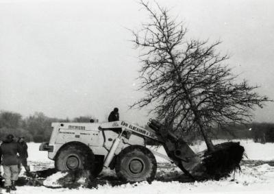 Kluckhohn tree mover moving large pin oak when Route 53 was made four lanes