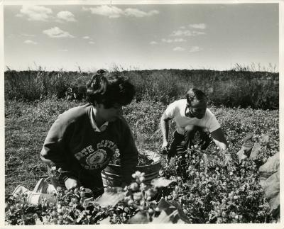 Cathy Ciolac and Ray Schulenberg weeding in the Schulenberg Prairie