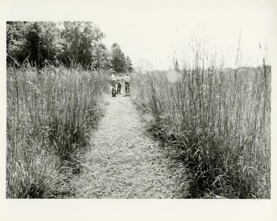 Prairie plants with three in background  in the Schulenberg Prairie