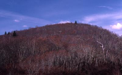 Quercus rubra var. ambigua (northern red oak), bare trees on hill