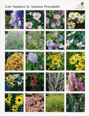 Late Summer & Autumn Perennials