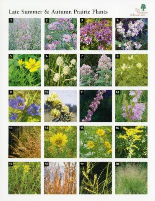 Late Summer & Autumn Prairie Plants