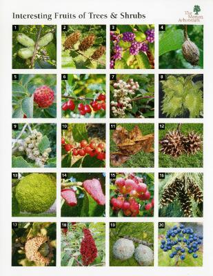 Interesting Fruits of Trees & Shrubs