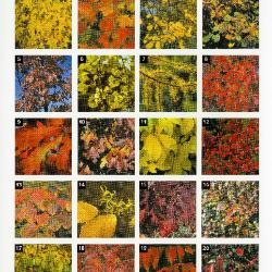 Trees & Shrubs with Fabulous Fall Color