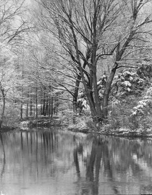 Early Snowfall, The Morton Arboretum
