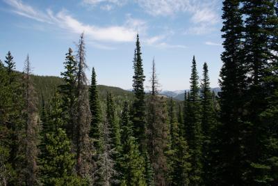 Abies lasiocarpa (Subalpine Fir), habitat