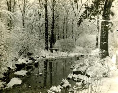 Winter - Morton Arboretum