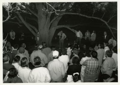 Twilight Tree Walk - Ron Picco as cork tree