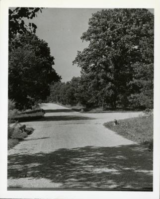 View looking north on Spring Road at Oakwood Drive