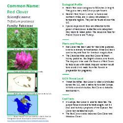 Planted: Finding Your Roots in STEM Careers: Episode 3: Favorite plant of Aurélie de RUS Jacquet