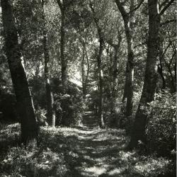 Big Rock along a trail in Summer