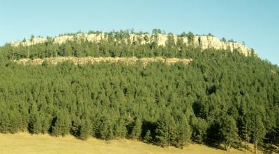 Pinus ponderosa (Ponderosa Pine), habitat
