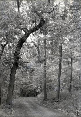 Arboretum road in summer through woods