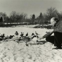 Alfred Etter feeding geese on frozen Arbor Lake