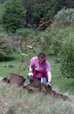 Rita Hassert with potted young tree kneeling by soil at planting hole