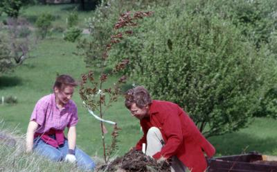 Rita Hassert and Tom Simpson planting young tree on hill