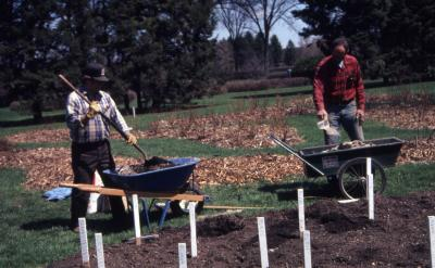 John Swisher and Bill Bergmann preparing rose beds with stakes