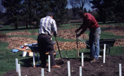 John Swisher and Bill Bergmann digging holes in rose beds for planting