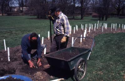 Bill Bergmann and John Swisher planting in rose beds