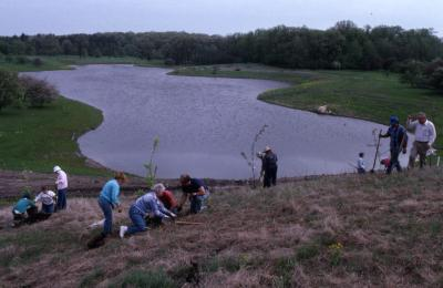 Groups of Arboretum employees planting young trees on berm near Crabapple Lake