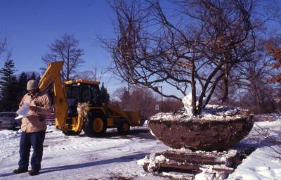 Duane Henry with backhoe and large root balled tree in winter