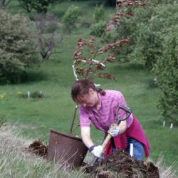 Rita Hassert digging hole for potted young tree on hill