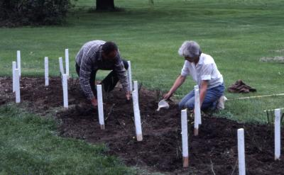 Grounds workers working on rose beds