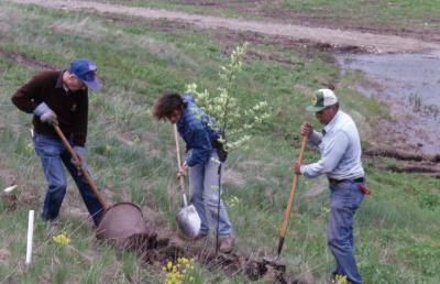 Dr. Marion Hall with two employees adding soil to newly planted young tree near Crabapple Lake