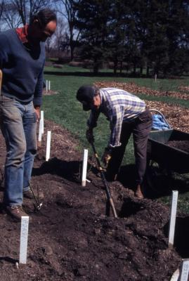 Bill Bergmann and John Swisher digging planting holes for rose beds