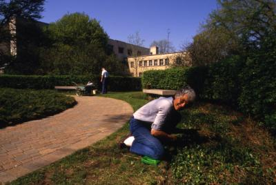 Arboretum staff or volunteer working on plant beds along brick path to Administration building