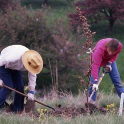 Charles Lewis and Rita Hassert planting young tree
