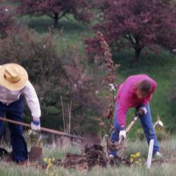 Charles Lewis and Rita Hassert filling in soil around newly planted tree