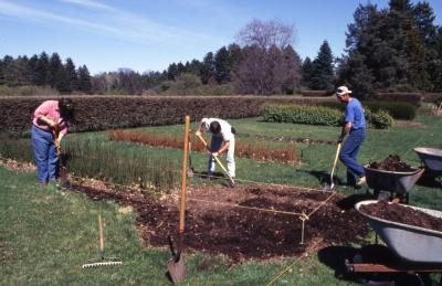 Horticulture crew preparing planting bed in Hedge Collection