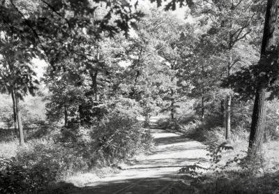 Arboretum road in summer curving to left through woods