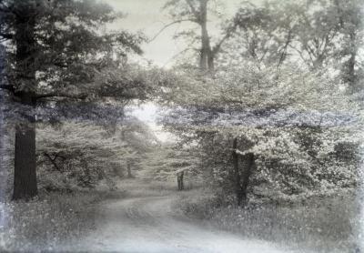 Arboretum unpaved road alongside flowering hawthorns in spring