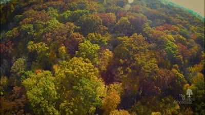 Fall Color Festival, 2016, trailer, promo, updated with mystery dinner