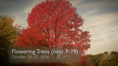 Fall Color Report, October 20-27, 2016