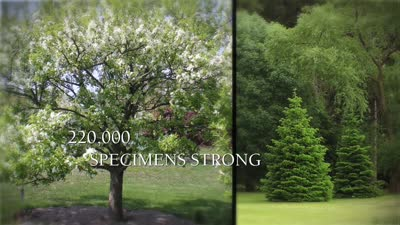 The Champion Of Trees, brand, online ad/social media, 15 seconds, version B