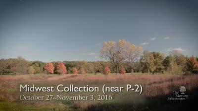 Fall Color Report, October 27-November 3, 2016