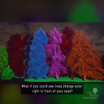 Treeology, Illumination, Winter 2016-2017, Treemagination, IG tease