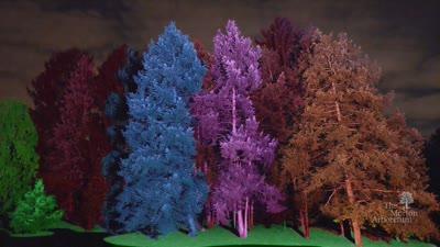 Treeology, Illumination, Winter 2016-2017, Treemagination