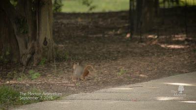 Squirrel, social media