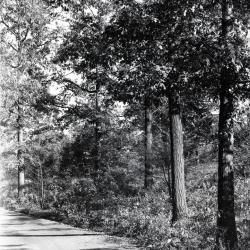 Trees in October alongside Ridge Road