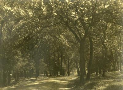 Arbor Lodge gardens and surrounding landscape, unpaved road through wooded area