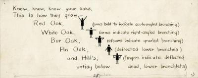 Arboretum Landscape Teaching Aid Series: Know, Know, Know Your Oaks, This Is How They Grow